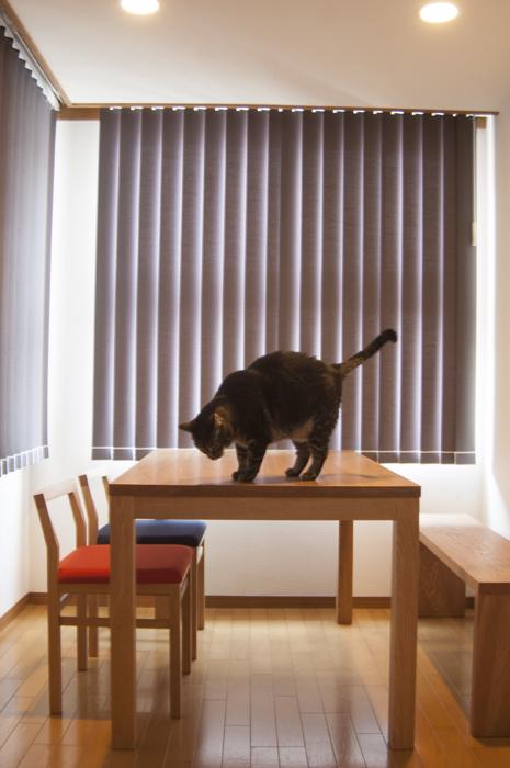 スタンダードテーブルとお客さまの飼い猫