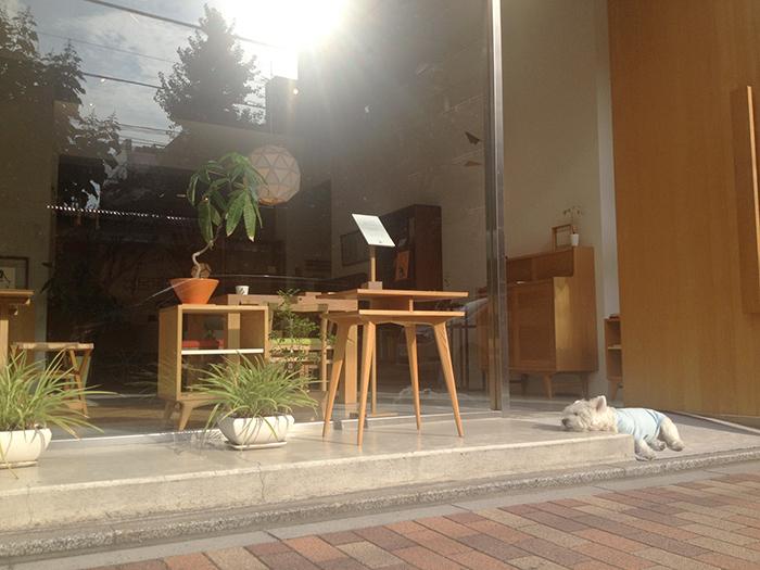WOODWORKの入口でくつろぐベティの画像