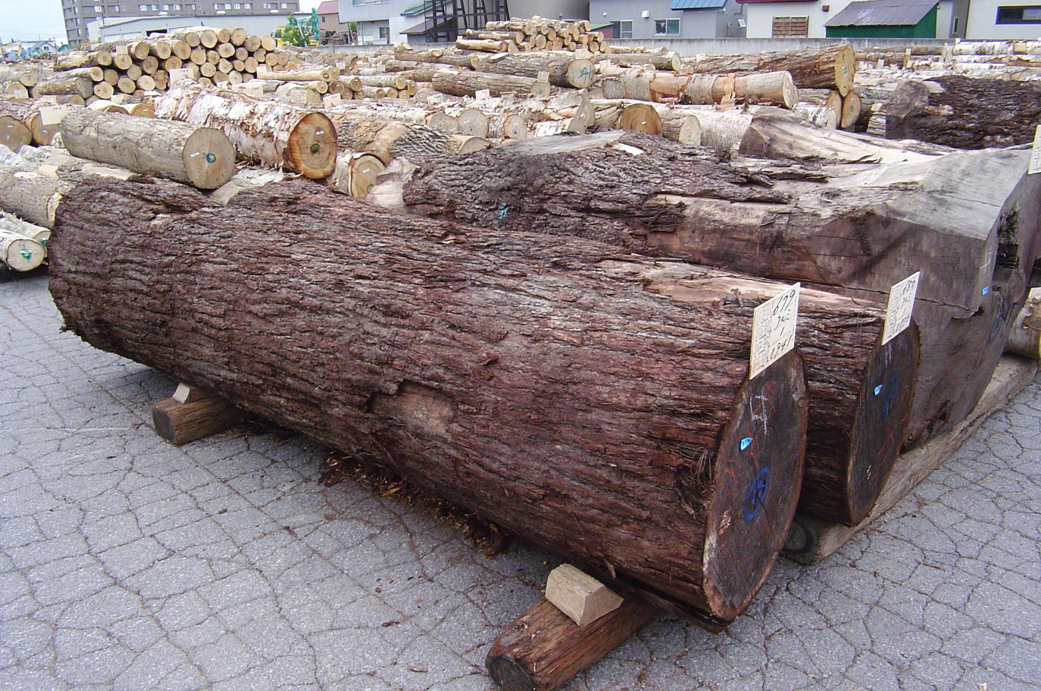 旭川の市場に並んでいたアメリカンブラックウォールナットの丸太